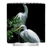 Great Egret Pair Shower Curtain by Skip Willits