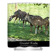 Greater Kudu Shower Curtain by Chris Flees