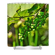 Green Berries Shower Curtain by Kaye Menner