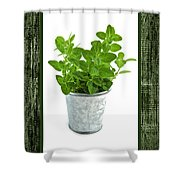 Green Oregano Herb In Small Pot Shower Curtain by Elena Elisseeva