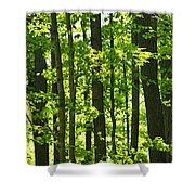 Green Spring Forest Shower Curtain by Elena Elisseeva