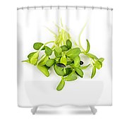 Green Sunflower Sprouts Shower Curtain by Elena Elisseeva