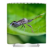 Grey Plant Bug 1 Shower Curtain by Douglas Barnett