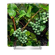 Growing Season Shower Curtain by Frozen in Time Fine Art Photography