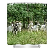 Guardians Of The Forest Shower Curtain by Mountain Dreams