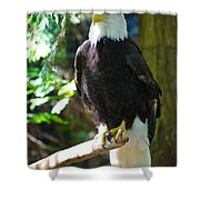 Guarding Liberty Shower Curtain by Roger Reeves  and Terrie Heslop
