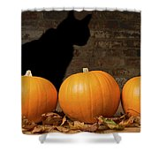 Halloween Pumpkins And The Witches Cat Shower Curtain by Amanda And Christopher Elwell