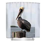 Handsome Brown Pelican Shower Curtain by Carol Groenen