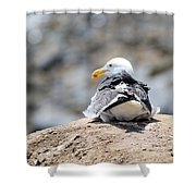 Hanging Out Shower Curtain by La Dolce Vita