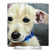 Hank Shower Curtain by Jeanne Fischer