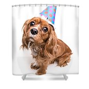 Happy Birthday Puppy Shower Curtain by Edward Fielding