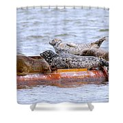 Harbour Seals Lounging Shower Curtain by Sharon Talson