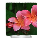 He Pua Laha Ole Hau Oli Hau Oli Oli Pua Melia Hae Maui Hawaii Tropical Plumeria Shower Curtain by Sharon Mau
