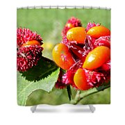 Hearts-a-Bursting Seed Pods Shower Curtain by Duane McCullough