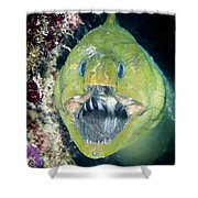 Hello There Shower Curtain by Jean Noren