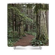 Heritage Forest Shower Curtain by Randy Hall