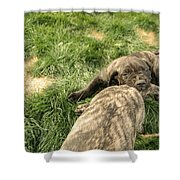 Hey You Come Back Here Buddy Shower Curtain by Jeff Swan