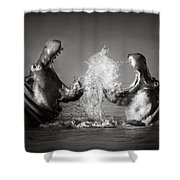 Hippo's Fighting Shower Curtain by Johan Swanepoel