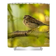 His Eye Is On The Sparrow Shower Curtain by Lois Bryan