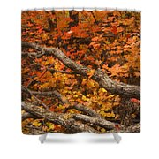 Holding Back Shower Curtain by Peter Coskun