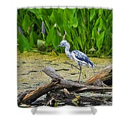 Hooligan Heron Shower Curtain by Al Powell Photography USA