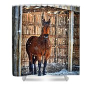 Horse And Snow Storm Shower Curtain by Dan Friend