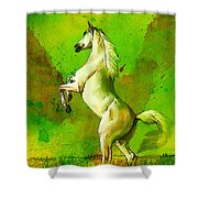 Horse Paintings 010 Shower Curtain by Catf