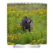Horse Power Flower Power Shower Curtain by Bob Hislop