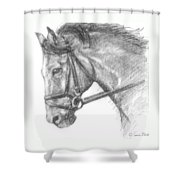 Horse's Head With Bridle Shower Curtain by Sarah Parks