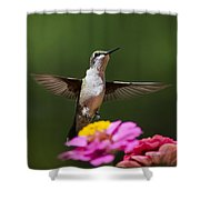 Hummingbird Shower Curtain by Christina Rollo