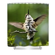 Hummingbird Happy Dance Shower Curtain by Christina Rollo