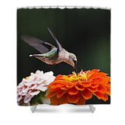 Hummingbird In Flight With Orange Zinnia Flower Shower Curtain by Christina Rollo