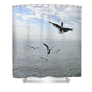 Hungry seagulls flying in the air Shower Curtain by Matthias Hauser