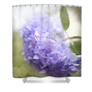 Hush Shower Curtain by Amy Tyler