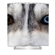 Husky Eyes Shower Curtain by Keith Allen