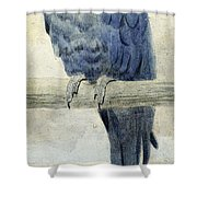 Hyacinthine Macaw Shower Curtain by Henry Stacey Marks