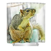 I Wasn't Me   The Cardinal Did It Shower Curtain by Debbie Portwood