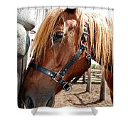 Im Resting My Head Shower Curtain by Todd and candice Dailey