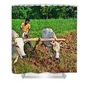 Indian Farmer Plowing With Bulls Shower Curtain by Image World