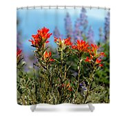Indian Paintbrush Shower Curtain by Robert Bales