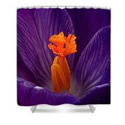 Interior Design Shower Curtain by Rona Black