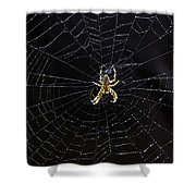 Itsy Bitsy Spider My Ass 2 Shower Curtain by Steve Harrington