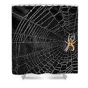 Itsy Bitsy Spider My Ass 3 Shower Curtain by Steve Harrington