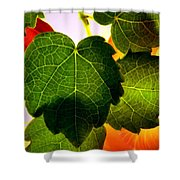 Ivy Light Shower Curtain by Chris Berry