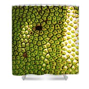 Jacked Up Fruit Shower Curtain by Chuck  Hicks