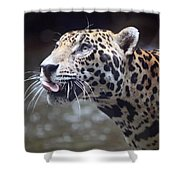 Jaguar Sticking Out Tongue Shower Curtain by Shoal Hollingsworth
