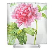 Japanese Tree Peony Shower Curtain by Pierre Joseph Redoute