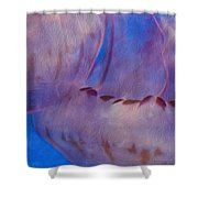 Jellies Shower Curtain by Jack Zulli