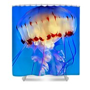 Jellyfish 3 Shower Curtain by Dawn Eshelman