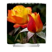 Judy Garland Rose Shower Curtain by Rona Black